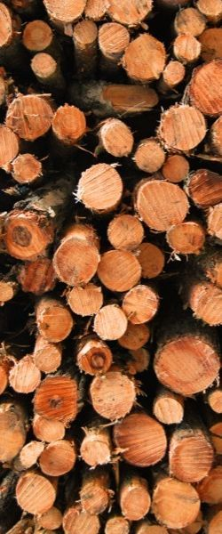 Bomen over hout